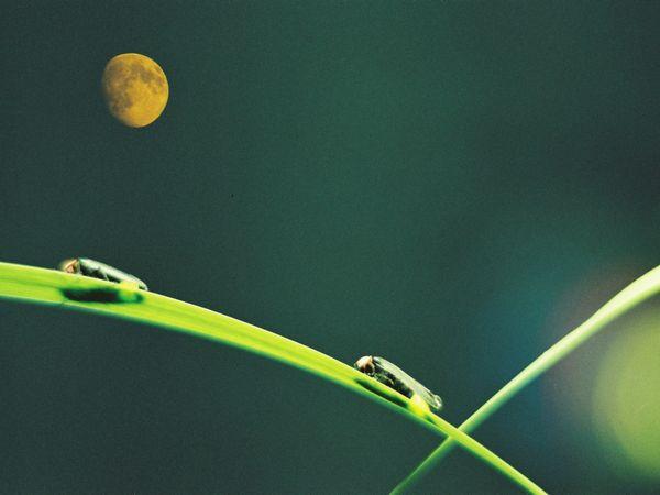 【ホタル飛び交うおらが里】月夜野ホタルの里送迎付き観賞プラン をアップいたしました。