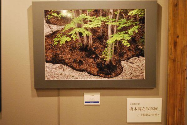 フォトギャラリー企画展の写真が入れ替わりました。 【橋本博之企画展】~上信越の自然~